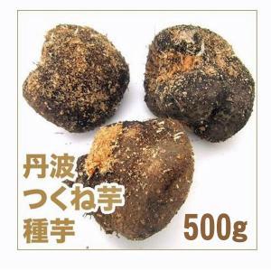 野菜・種/苗 つくね芋/丹波つくね芋 山の芋・山芋・ヤマイモ 種芋・生もの種 約500g [約2個]|vg-harada