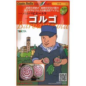 野菜の種/種子 ゴルゴ・バルバビエートラ・イタリア野菜 80粒 (メール便可能)|vg-harada