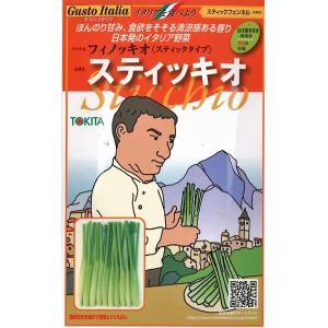 野菜の種/種子 スティッキオ・フィノッキオ・イタリア野菜 200粒 (メール便可能)|vg-harada