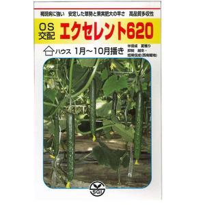 野菜の種/種子 エクセレント620 きゅうり 350粒 (メール便可能/大袋)|vg-harada