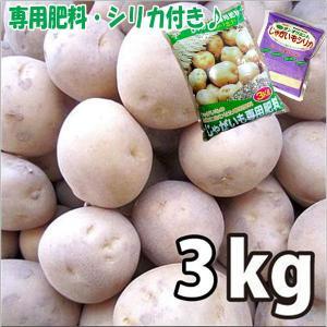 お買い得♪野菜・種/苗   [秋じゃがいも種芋] 出島  じゃがいも種芋・生もの種 量り売り3kg+じゃがいも専用肥料+シリカ付き 【7月下旬頃より順次発送】|vg-harada