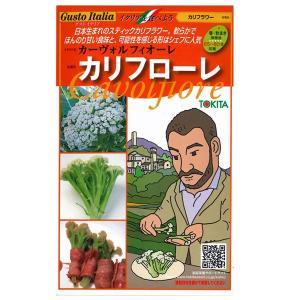 野菜の種/種子 カリフローレ・カーヴォルフィオーレ イタリア野菜 50粒 (メール便可能)|vg-harada
