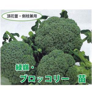 野菜の苗 緑嶺 ブロッコリー 苗 4ポット入りセット/9cmポット|vg-harada
