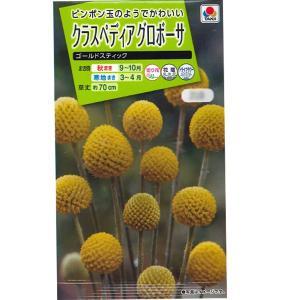 花の種 クラスペディアグロボーサ[ゴールドステック] 0.1ml(メール便可能)|vg-harada