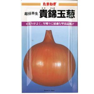 野菜の種/種子 ・貴錦玉葱 タマネギ 2dl缶入  (大袋)|vg-harada