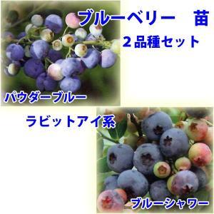 花の苗 ブルーベリー 苗木 パウダーブルー,ブルーシャワー/2ポットセット/9cmポット/鉢植え/花壇/食用|vg-harada