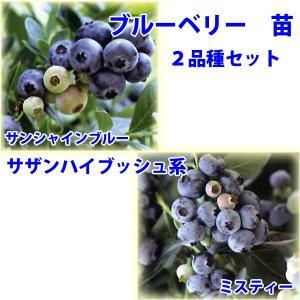 花の苗 ブルーベリー 苗木 サンシャインブルー ミスティー/2ポットセット/9cmポット/鉢植え/花壇/食用|vg-harada