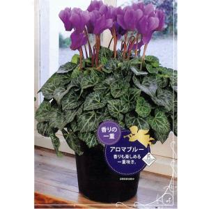 数量限定!送料無料 花の苗 鉢花 セレナーディア アロマブルー 5号花鉢/1ポット サントリー|vg-harada