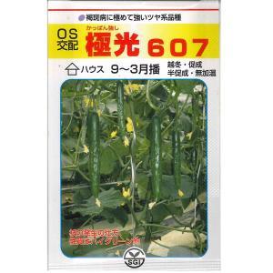 野菜の種/種子 極光607 キュウリ きゅうり 350粒 (メール便可能/大袋)|vg-harada