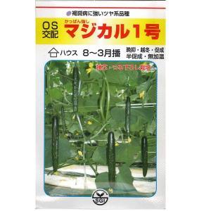 野菜の種/種子 マジカル1号  キュウリ きゅうり 350粒 (メール便可能/大袋)|vg-harada
