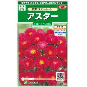 花の種 アスター[松本 スカーレット] 1ml(メール便可能)|vg-harada