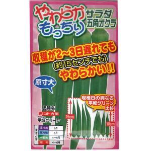 野菜の種/種子 平城グリーン・サラダ五角オクラ 7ml (メール便可能)|vg-harada