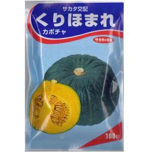 野菜の種/種子 くりほまれ・かぼちゃ 100粒 (メール便可能/大袋)サカタのタネ vg-harada