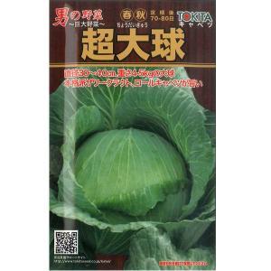 野菜の種/種子 超大球・キャベツ 1ml (メール便可能)|vg-harada