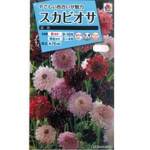 花の種 スカビオサ[混合] 0.5ml(メール便可能)|vg-harada