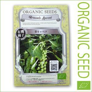 有機種子/野菜の種 芽キャベツ 0.5g(メール便可能)|vg-harada