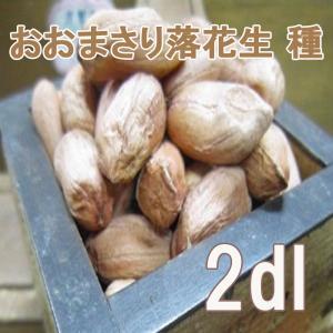【数量限定!】野菜・種/苗 おおまさり 落花生・生もの種 2dl(約60粒) 【3月下旬頃より順次発送】|vg-harada