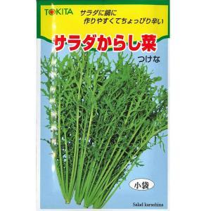 野菜の種/種子 サラダからし菜・カラシナ 12ml (メール便可能)|vg-harada
