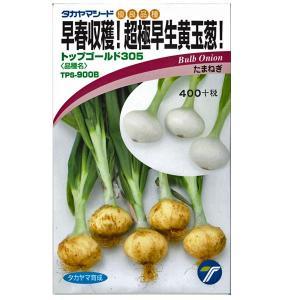 野菜の種/種子 早春収穫!超極早生玉葱!トップゴールド305・タマネギ 3.5ml (メール便可能)|vg-harada