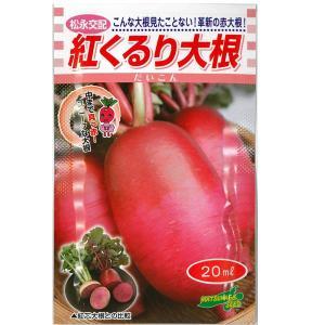 野菜の種/種子 紅くるり大根・だいこん 20ml (メール便可能/大袋)|vg-harada