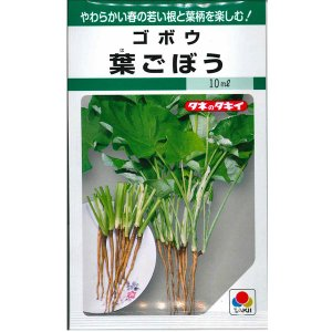 野菜の種/種子 葉ごぼう ゴボウ 10ml (メール便可能)タキイ種苗|vg-harada