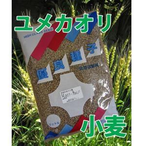 野菜の種/種子 小麦・ゆめかおり ユメカオリ 1kg|vg-harada
