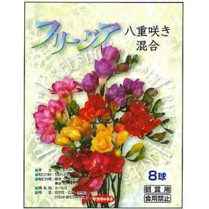 花・球根 フリージア 八重咲き混合 8球入[秋植え球根]|vg-harada