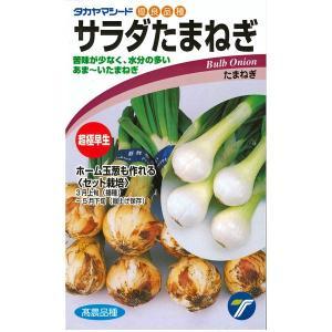 野菜の種/種子 超極早生玉葱!サラダたまねぎ・タマネギ 4ml (メール便可能)|vg-harada