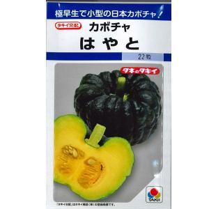 野菜の種/種子 はやと・カボチャ かぼちゃ 南瓜 22粒 (メール便可能)タキイ種苗|vg-harada