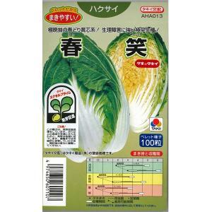 野菜の種/種子 春笑・ハクサイ ハクサイ 白菜 100粒 (メール便可能)タキイ種苗|vg-harada