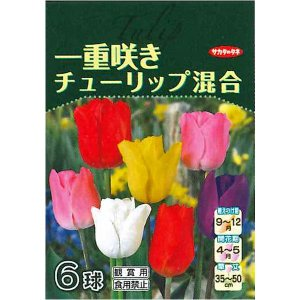 花・球根 一重咲きチューリップ 混合 6球入[秋植え球根]|vg-harada