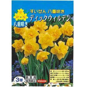 花・球根 八重咲きすいせん スイセン 水仙 [ディックウィルデン] 3球入 [秋植え球根]|vg-harada