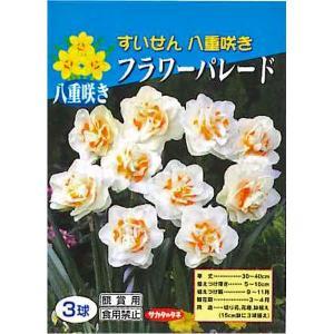 花・球根 八重咲きすいせん スイセン 水仙(フラワーパレード)3球入[秋植え球根]|vg-harada