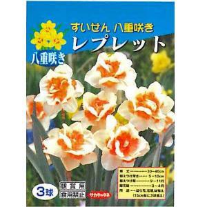 花・球根 八重咲きすいせん スイセン 水仙(レプレット)3球入[秋植え球根]|vg-harada