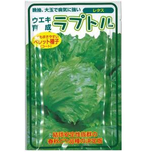 野菜の種/種子 ラプトル レタス 100粒 (メール便可能)|vg-harada