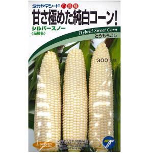 野菜の種/種子 シルバースノー ・とうもろこし トウモロコシ 18ml (メール便可能)|vg-harada