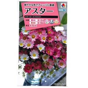 花の種 アスター[ネネ ローズフロスト] 0.5ml(メール便発送)|vg-harada