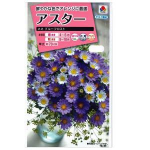 花の種 アスター[ネネ ブルーフロスト] 0.5ml(メール便発送)|vg-harada