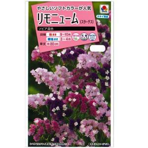 花の種 リモニューム スターチス[ソピア混合] 0.2ml(メール便発送)|vg-harada