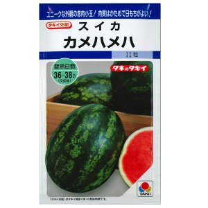野菜の種/種子 カメハメハ ・スイカ すいか 西瓜 11粒 (メール便可能)タキイ種苗|vg-harada
