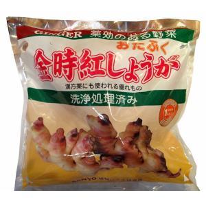 数量限定!野菜・種/苗 金時紅生姜 赤芽生姜/おたふく生姜 お多福 しょうが・生もの種 種生姜 1kg|vg-harada