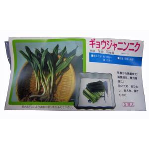 野菜・種/苗  ギョウジャニンニク・茖葱・行者蒜 種・生もの種  3球入[袋詰め山菜]|vg-harada