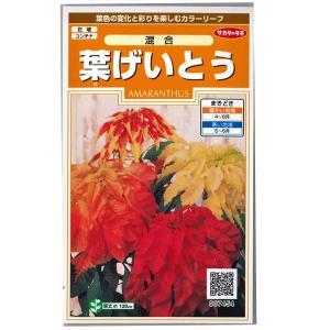 花の種 葉げいとう[混合] 0.3ml(メール便可能) vg-harada