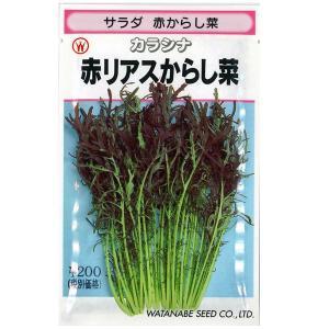 野菜の種/種子 サラダ 赤リアスからし菜・カラシナ 7ml (メール便可能)|vg-harada