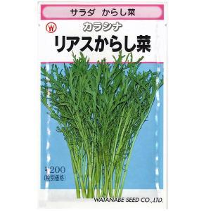 野菜の種/種子 サラダ リアスからし菜・カラシナ 7ml (メール便可能)|vg-harada