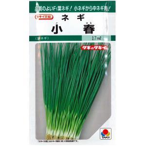 野菜の種/種子 小春 ネギ ・ねぎ 17ml (メール便可能)タキイ種苗 vg-harada