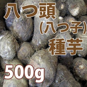 野菜・種/苗 八つ頭芋/八つ子(里芋) 種芋・生もの種 量り売り500g|vg-harada