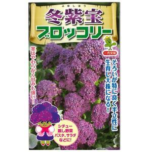 野菜の種/種子 冬紫宝 ・ブロッコリー 0.5ml (メール便可能) vg-harada