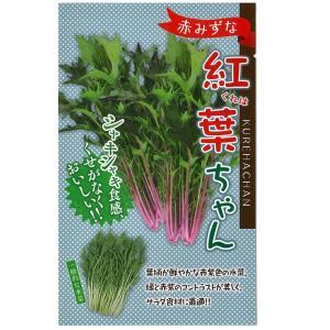 野菜の種/種子 紅葉(くれは)ちゃん 水菜・赤みずな 5ml (メール便可能) vg-harada