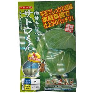 野菜の種/種子 サトウくん・キャベツ 40粒 (メール便可能)|vg-harada